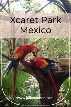 Xcaret Park is a wonderful and magical place to visit. There is an aquarium and outdoor habitats for many more animals than you can list in one post. Float through an underground river and snorkel in a cove on a beautiful beach with plenty of places to sit or lay. There are also great shows in the evening! Marketed for families but I had a blast solo as well!