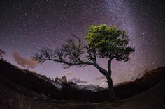 Midnight Tree  © Max Seigal/National Geographic Traveler Photo Contest via www.weekend.be