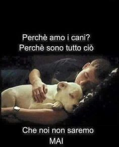 Buongiorno!! I Love Dogs, Puppy Love, Cute Dogs, Dog Best Friend, Dog Friends, Best Friends Forever, Dad To Be Shirts, Dog Shirt, Little Dogs