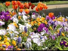 Planter des bulbes de printemps en automne - YouTube