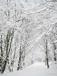 Die Raumfee: Winterwonderland