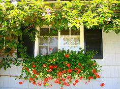 Sues Summer Window Box