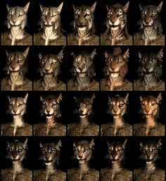 Skyrim, the Khajiit are the feline beast race of The Elder Scrolls series. They're excellent thieves and assassins due to their heightened sneak and acrobatic skills. Elder Scrolls Skyrim, The Elder Scrolls, Skyrim Werewolf, Skyrim Races, Fandom Games, Wood Elf, Video Game Art, Character Concept, Games