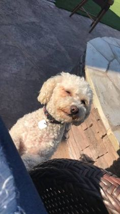 LOST DOG: 09/26/2017 - Escondido, California, CA, United States. Ref#: L37285 - #CritterAlert #LostPet #LostDog #MissingDog