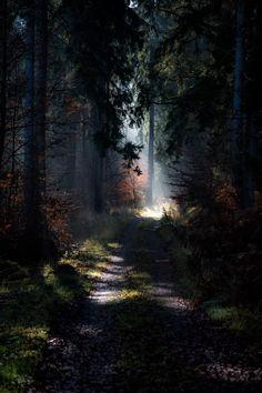 Novemberwoods by Thomas Timmermann on 500px