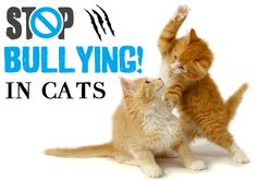 Bullying In #Cats And Find Out How To #Resolve It!!