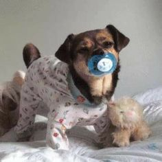 Michael Shanks, Cute Baby Animals, Animals And Pets, Funny Animals, Cutest Babies Ever, Cute Babies, Funny Dogs, Funny Memes, Good Night Gif
