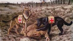 Poster Print-Redcross War Dogs poster sized print mm) made in the UK War Dogs, Belgian Shepherd, German Shepherd Dogs, German Shepherds, Dachshund, Canis Lupus, Search And Rescue Dogs, Belgian Malinois, Police Dogs