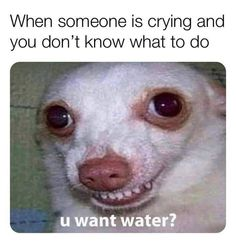 """Relatable Memes For People Who Just Need To Feel Heard - Funny memes that """"GET IT"""" and want you to too. Get the latest funniest memes and keep up what is going on in the meme-o-sphere. Funny Memes Tumblr, Funny Instagram Memes, Super Funny Memes, Funny Dog Memes, Crazy Funny Memes, Really Funny Memes, Stupid Memes, Funny Relatable Memes, Haha Funny"""