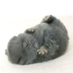 Look at those cute little feet!!!
