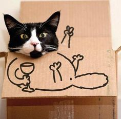 Some Wine Lovers are having FUN... with their Cat