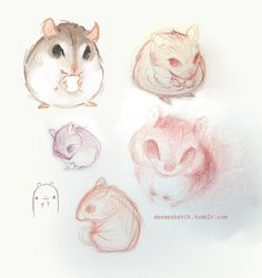 Denae Wilkowski, hamsters. :D  They're just SO very hamster-like.