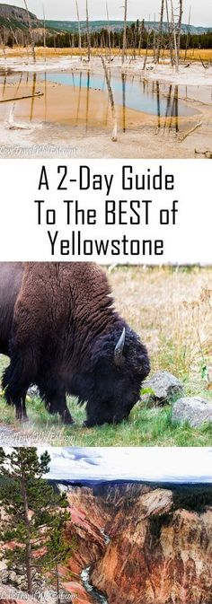 A Guide to the BEST of Yellowstone Travel National Parks Yellowstone Montana Wildlife What to Do How to see Yellowstone in 2 Days Yellowstone Camping, West Yellowstone Montana, Visit Yellowstone, Yellowstone Vacation, Wyoming Vacation, Chobe National Park, National Parks Usa, Grand Teton National Park, National Stadium