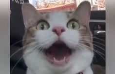 Когда они рассказывали друзьям, что умеет делать их кот, никто не верил. Пришлось записать это видео...