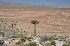 Richtersveld tour in Namaqualand by Pictures of scenery and geology information. Travel Tours, Tour Guide, Geology, South Africa, 4x4, Succulents, Deserts, Scenery, Landscape
