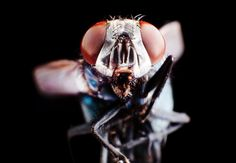"""UP CLOSE: THE UNSEEN FACES OF INSECTS (rke times): """"Oer the course of the past few months, I have developed a reputation as a repository for all kinds of strange bugs. One day this summer, Roanoke Times M.E. Michael Stowe came back to my desk with the biggest beetle I have ever seen. """"I hear you are doing a bug project,"""" Stowe said as he handed me the beast of a bug that had climbed into staff writer Lindsey Nair's shoe during a news meeting. He was right — and I gladly took the beetle."""""""
