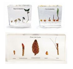 The three clear acrylic blocks allow students to inspect the plant specimens in detail and from any angle. Science Curriculum, Different Plants, Plant Growth, Children's Literature, Life Cycles, Student Learning, Herbal Remedies, Clear Acrylic, Pine