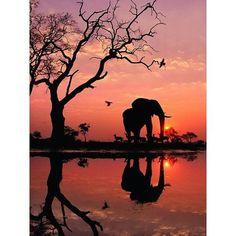 Elephant In Sunset 5D DIY Paint By Diamond Kit