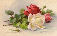 Catherine Klein, Art Floral, Clip Art Vintage, Rose Clipart, Rose Pictures, Rose Art, Vintage Flowers, Vintage Floral, Botanical Prints