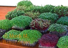 Grow microgreens in recycled containers!  Poke holes in the bottom with a pin for drainage.  Use the top to catch extra water. lp