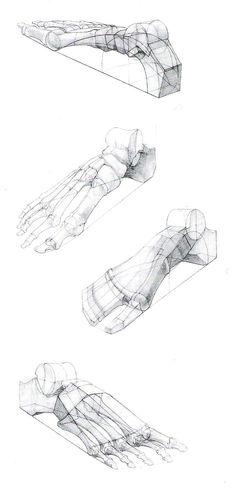 * Foot Leg & Paw & Claw * 20