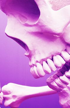 #skull #crossbones