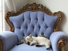 Beautiful kitty cats and chair.
