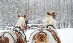 Red Lodge Montana Sleigh Rides - I think we might have to take Rowan on a winter sleigh ride! We grew up on a ranch and two of our neighbors had sleighs, 'the pug' and a box sled. Telluride Colorado, Breckenridge Colorado, Breckenridge Lodging, Colorado Snow, Starved Rock State Park, Red Lodge, Images Google, Back Road, Rocky Mountains