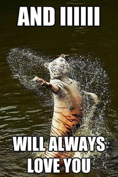 Top 30 Funny Animal Pictures and Jokes #humor