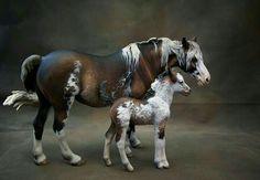 Cute model horses! || Follow me @annabellewinters