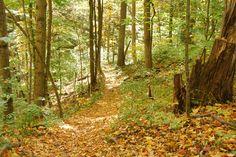 Fall at Twin Creek MetroPark