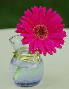 Gerber daisy... love.