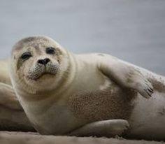seal watching cruises !!!!  Long Island New York http://www.riverheadfoundation.org/mediacenter/detail.asp?briefing_id=92