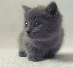 tiny, black and fluffy