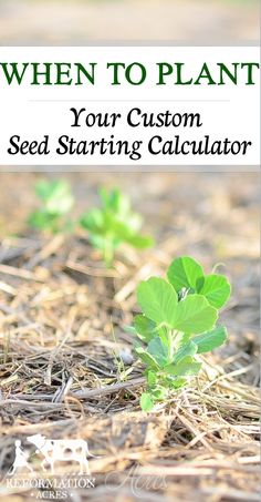 A Custom Seed Sowing Calculator to help you know when to plant your vegetable & herb seeds. | www.reformationacres.com: A Custom Seed Sowing Calculator to help you know when to plant your vegetable & herb seeds. | www.reformationacres.com
