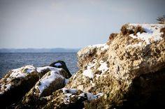 Udsigt til Lillebælt #visitfyn #fyn #nature #visitdenmark #naturelovers #natur #denmark #danmark #dänemark #landscape #nofilter #assens #mitassens #vildmedfyn #fynerfin #assensnatur #vielskernaturen #visitassens #instapic #picoftheday #canon #natgeo #sky #winter #february #opdagdanmark #winterindenmark
