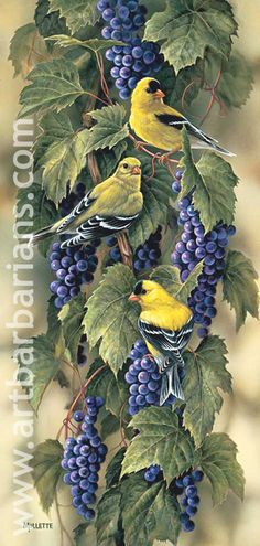 Wild Wings is one of today's leading publishers, distributors and retailers of wildlife art prints and nature-related home furnishings and decorating accessories, perfect for home and cabin decor. Art Watercolor, China Painting, Bird Pictures, Vintage Birds, Colorful Birds, Wildlife Art, Bird Prints, Animal Paintings, Bird Art