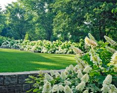 Traditional Spaces Hydrangea Hedge Design, Pictures, Remodel, Decor and Ideas - page 6