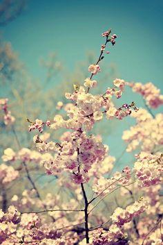 Delicate by Alex Teuscher on Dandelion, Delicate, Purple, Pink, Fruit, Flowers, Plants, Photos, Dandelions