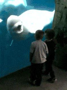 I like this dolphin