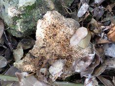 Corales fosiles.