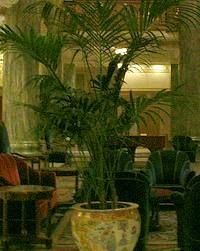 palmeira no vaso