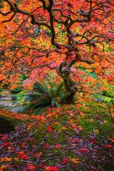 31 Ideas For Fall Landscape Paintings Nature God Fall Pictures, Nature Pictures, Pictures Of Leaves, Beautiful Landscapes, Beautiful Gardens, Portland Japanese Garden, Japanese Gardens, Landscape Photography, Nature Photography