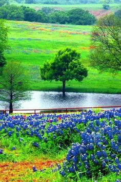 Ennis, Texas - just 25 minutes south of downtown Dallas on is a perfect place to bring the family for a spring weekend of viewing bluebonnets & wildflowers, as well as antiquing Texas Forever, Texas Bluebonnets, Loving Texas, Texas Pride, Texas Hill Country, Texas Travel, Blue Bonnets, Belle Photo, Beautiful Landscapes