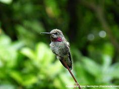National Geographic's Backyard Birds List A to Z