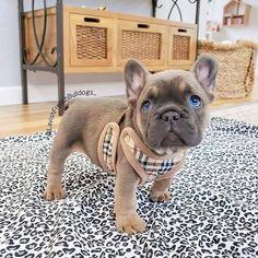 Dog Breeds Little .Dog Breeds Little Super Cute Puppies, Baby Animals Super Cute, Cute Baby Dogs, Cute Little Puppies, Cute Dogs And Puppies, Cute Little Animals, Cute Funny Animals, Pet Dogs, Doggies