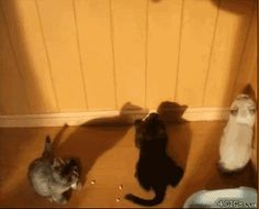 Kittens and Shadow.  Click to view animation.