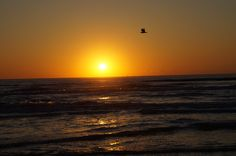 Beautiful sunset in Texas.  #abirdsdelight #texasbirds
