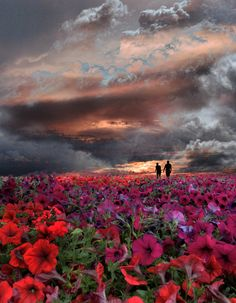#storm #storm_clouds #red #flowers photo by peter holme iii 500px