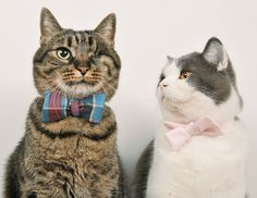 """** ["""" Dat bow tie be outlandish!""""] -- [""""Don't worrys 'bout meez wonky eye or anythin'."""""""
